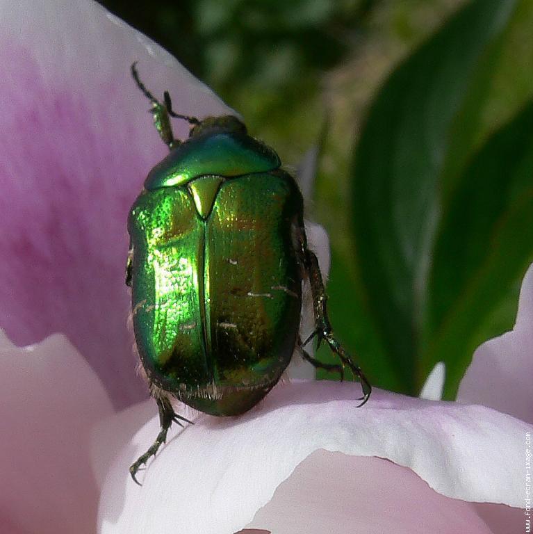 Bmw forum topic officiel page 1204 auto titre - Insecte vert volant ...