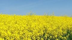 Biocarburants, l'Europe prend du retard sur la seconde génération
