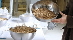 Futurol, un bioéthanol bon marché et réellement écolo