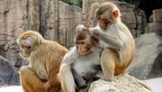 L'industrie auto allemande a fait respirer des gaz d'échappement à des singes