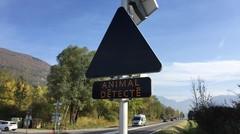 Accidents : des radars à animaux prouvent leur efficacité en Haute-Savoie