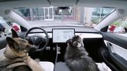 Dog Mode : les animaux confortablement installés dans votre Tesla Model 3