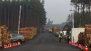 Tesla n'a plus le droit d'abattre des arbres en Allemagne, la gigafactory4 en stand-by