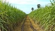 Bioéthanol E85 : la composition du biocarburant