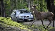 Volvo : un système pour réduire les accidents avec des animaux
