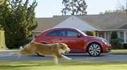 Super Bowl 2012 : Bolt le chien et la nouvelle Volkswagen Coccinelle