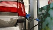 Pénurie de l'essence : et si les algues remplaçaient le pétrole ?