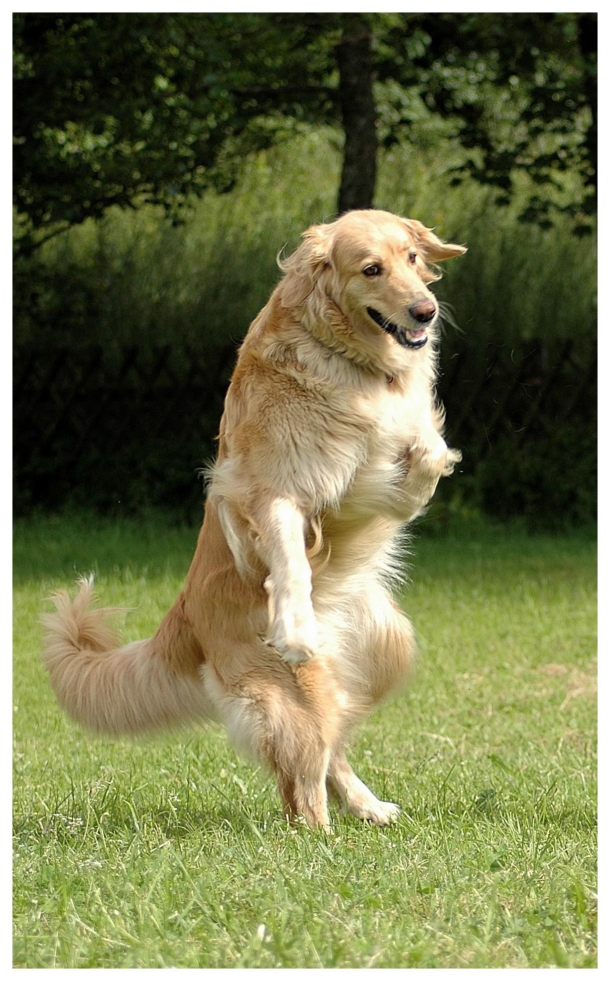 quelle sportive pour mettre un grand chien    banquettes